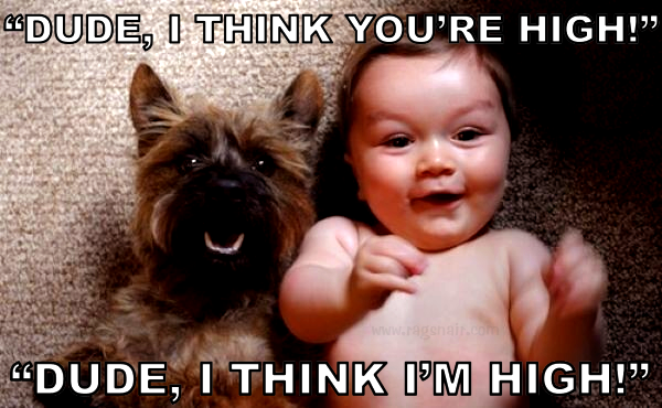 Funny-Dogs-And-Babies-Best-Friends-Forever-17